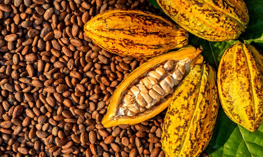Cocoa Processing Industry in Nigeria by Limult